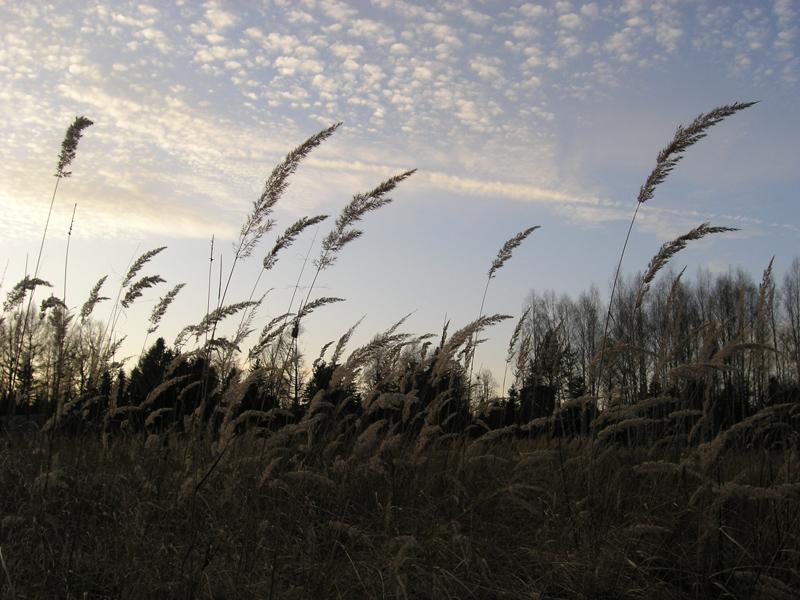 Картинки осенней травы
