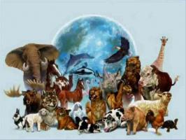 Картинки по запросу картинка к программе экологический клуб
